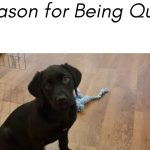 Reason for being quiet…