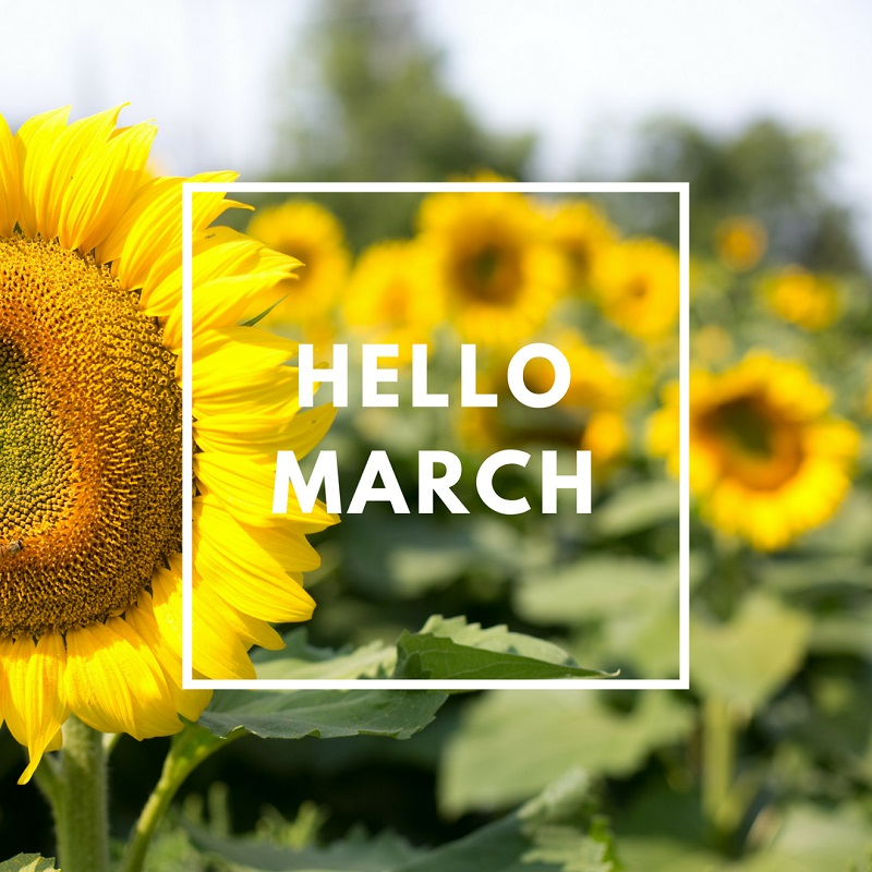 Simply-Shine - Hello March