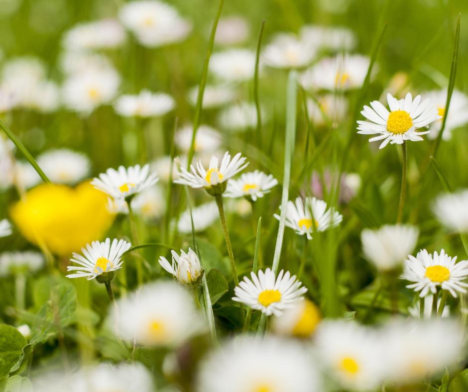 flowers enjoying life's simple pleasures