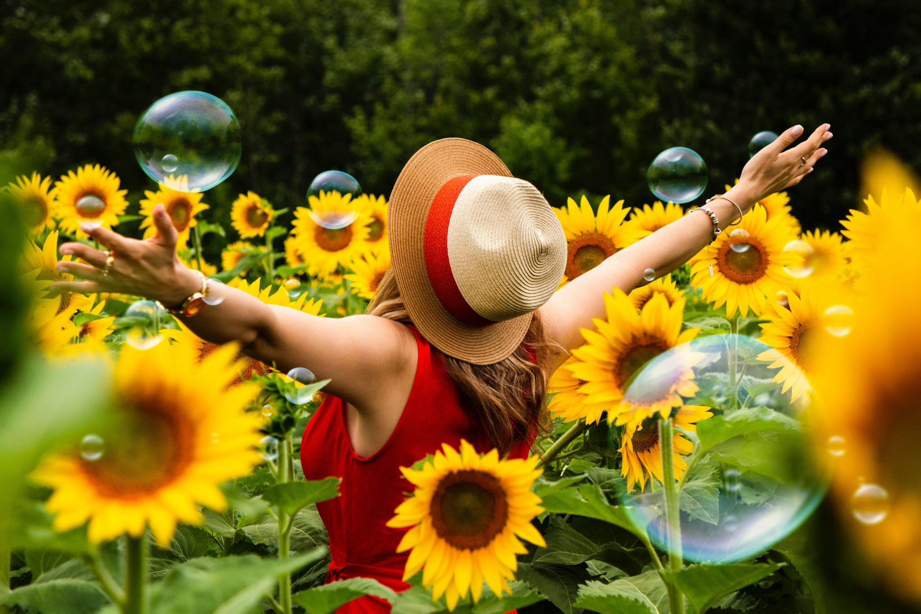 beautiful sunflowers and happy woman with her arms stretched out
